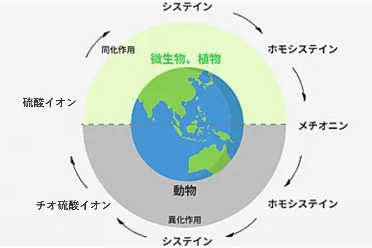 【研究紹介】サルファーインデックス解析